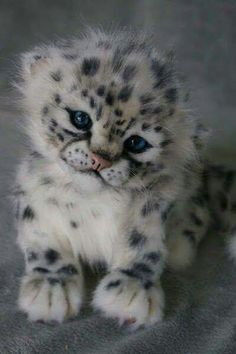 66 best animals images on pinterest in 2018 fluffy animals