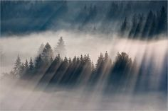 Foggy Landscapes by Boguslaw Strempel