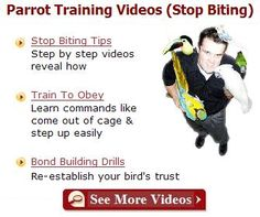 Best Parrot Training Videos...a must see!
