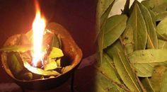 Brûlez du laurier chez vous afin de profiter de ces avantages sanitaires incroyables