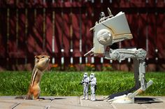 "Cute Chipmunks Playfully Interact with ""Star Wars"" Toys - My Modern Met"