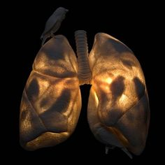 Everyone need a set of smoker lungs in they're living room :)