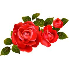 red roses vector image ~ Яндекс.Фотки