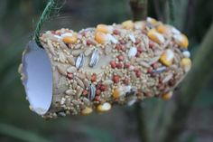 Bird Feeder, recycled, native birds, birds, diy, easy bird feeders, simple, cheap, fun