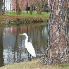 Just Beautiful in my backyard.  Louisiana....cannoy imagine a backyard this beautiful, with visitors like this....