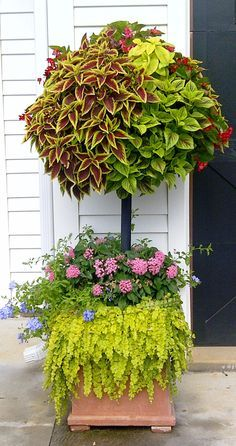Container Gardening Ideas Basket Column - Dragon Wing, Begonias, Coleus and below Plumbago, Pentas and Creeping Jenny - Garden Containers, Plants, Backyard Garden, Organic Gardening, Organic Gardening Tips, Garden Design, Shade Garden, Creeping Jenny, Garden Projects