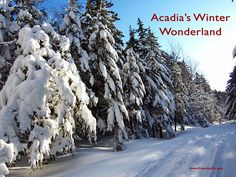 Acadia's Winter Wonderland: A guide to some great winter activities. Acadia National Park, National Parks, Xc Ski, Mount Desert Island, Winter Activities, Summer Months, Winter Wonderland, Skiing, Maine