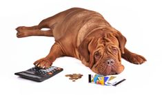 Americans spend a fortune on their dogs. Over $60 billion per year to be precise. We fall prey to well marketed products all the time. Dog products are increasingly aimed at satisfying the complex comforts and tastes of dog owners rather than the basic needs of the dog. #dog #budget #tips #advice #dogs #care #costs #finance #money #saving