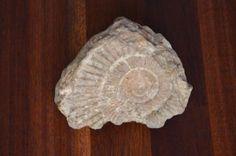 ≥ Fosiel - Mineralen en Fossielen - Marktplaats.nl