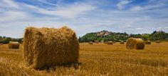 Farm houses - Agriturismi