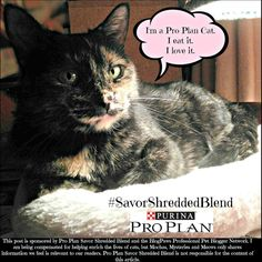 Melissa's Mochas, Mysteries and Meows: Savor the Purina Pro Plan Experience #SavorShreddedBlend #ad
