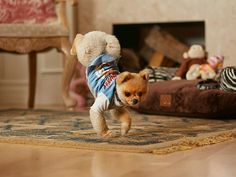 See the Fastest Dog on Two Paws in Action!