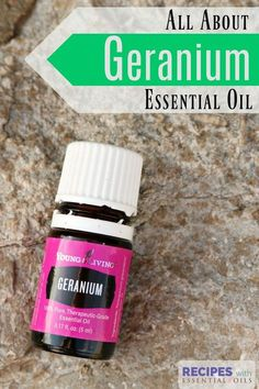 Getting to Know Your Oils - Geranium Essential Oil - Recipes with Essential Oils Geranium Oil, Geranium Essential Oil, Essential Oil Uses, Essential Ouls, Young Living Oils, Young Living Essential Oils, Pure Oils, Therapeutic Grade Essential Oils, Natural Beauty Tips