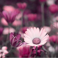 Spring by Greyness