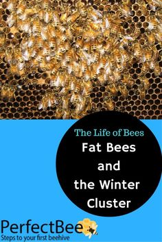 8653f1902b141 101 Best Bees in the Winter images in 2017 | Bees, Beekeeping, Honey ...