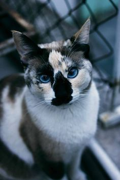 That is seriously the most gorgeous cat. I love very unique cats.