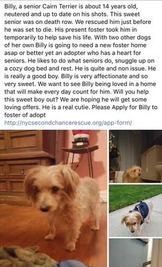 11/25/16 PLEASE APPLY FOR BILLY❤️ HE SURVIVED NYC ACC - NOW HE NEEDS LOVE AND TENDER CARE ❤️❤️ /ij🐾🐾 https://m.facebook.com/story.php?story_fbid=1078597918915929&id=268612969914432&__tn__=%2As