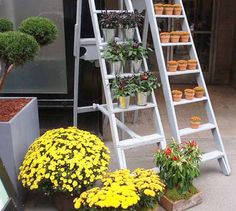 old-wooden-ladder-backyard-decorating-ideas-10