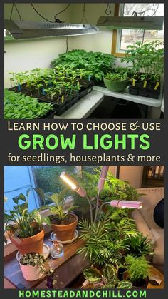 Using Grow Lights for Seedlings or Indoor Plants