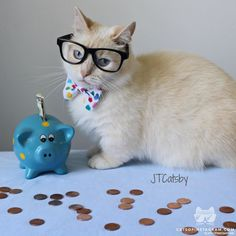 From @otisandjr: Saving for #College   #catsofinstagram [source: http://ift.tt/1UlMhRD ]
