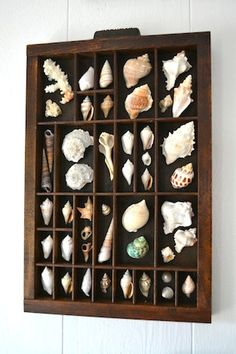 Vintage Type Tray with Shells by ShorelyChic on Etsy, $79.00