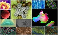 Photos: Beautiful images from the natural world highlighted in UW-Madison contest