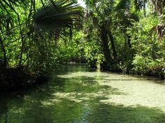 Juniper Run, Juniper Springs, Florida
