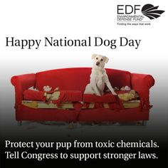 Toxic flame retardants—which aren't even effective in preventing fires—are putting our beloved pets at risk.   This National Dog Day, join us in taking action to protect our four-legged friends from dangerous chemicals.