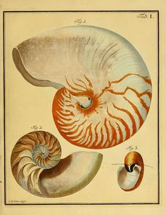 Belustigung im Reiche der Natur /  Hamburg: bei den Gebruden Herold,1790. | Biodiversity Heritage Library, Smithsonian Institute