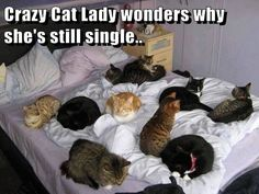 Crazy Cat Lady wonders why she's still single..  looks cozy haha