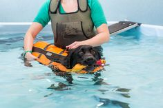 Benefits of Hydrotherapy — Aqua Hounds