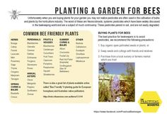 Planting a bee friendly garden - CERES – Centre for Education and Research in Environmental Strategies - Melbourne, Australia