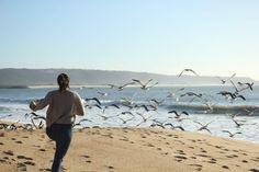 #freedom #beach #Seagull #photo #beautiful #life #sky #ocean