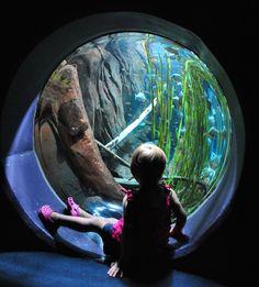 1000 Images About Georgia Aquarium On Pinterest Georgia