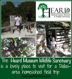The Heard Museum Natural Science Museum and Wildlife Sanctuary is a great place for a Dallas-area homeschool field trip. | thissweetlifeofmine.com