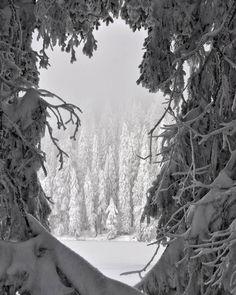 Winterwonderland at Mummelsee. #winterwonderland #mummelsee #schwarzwald #schnee #neve #winter #alemanha #germany #deutschland #florestanegra #blackforest