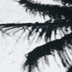 Summer shadows // via Cait Miers Photography