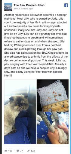 #AVMA2017 #AVMAmeets  #CatVets #AVMAvets #AAHAHealthyPet #NYSVMS #vettech   #AAHA2017 #CELasers  #AAHAday #njvma #aesculight #AVMAconv  #vcapethealth #banfield  #CElasersvet   #vetmed #vetlife #veterinary #vettech #veterinaryjob  #vetschool #vetstudent