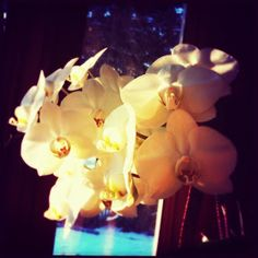 Visual: Orchids