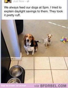 Dogs Took It Ruff…