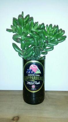 Crassula succulent in cider bottle. Crassula Succulent, Succulents, Sauce Bottle, Soy Sauce, Plants, Ideas, Food, Products, Meals