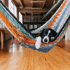 Find Momo The playful adventures of a hiding border collie. Beautiful Dogs, Animals Beautiful, Cute Animals, Agility Training For Dogs, Dog Agility, Border Collie Puppies, Collie Dog, Cute Puppies, Cute Dogs