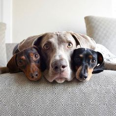 """""""These three are inseparable—literally! They are the best of friends and do…"""
