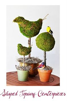 Shaped topiary centerpieces