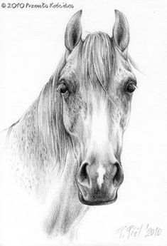 Pencil drawing pictures for kids horse head drawings in pencil drawing and coloring for kids art . Drawing Pictures For Kids, Pencil Drawing Pictures, Pencil Drawings Of Animals, Horse Drawings, Pictures To Draw, Drawing Tips, Horse Face Drawing, Drawing Heads, Horse Illustration