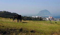 말이 한가로이 풀을 뜯는 여유로움~!  말들이 뛰어댕기고...  시원하게 불어오는 바람이 부는...  이곳은 바로 제주도입니다. ^_^