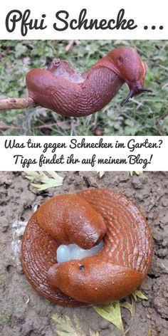 Tipps gegen Schnecken im Garten