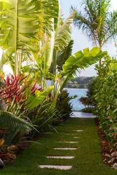 beautiful walkway through tropical garden...love this but hate when banana leaves go dry...hmmm.