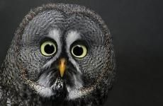 Owl Sales ﴾͡๏̯͡๏﴿ testing authorization off