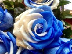Blue  white rose